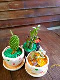 Small floras on the table. Stock Photography