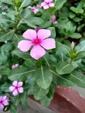 A small flowe. A small but very beautiful flower Stock Photo