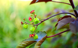 Small Flower. Amazing small red flowers with green background stock images
