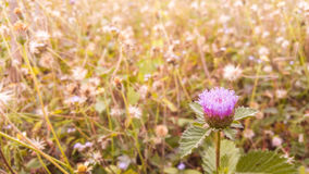 Small flower in the field. Selective focus small flower in the field Royalty Free Stock Photo