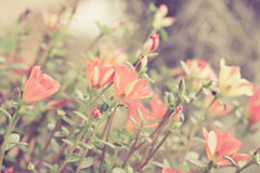 Small flower garden in beautiful bright colors Royalty Free Stock Photo