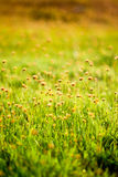 Small flower in grass Stock Image