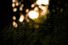 Small flower grass. And bokeh light from sunset Royalty Free Stock Image