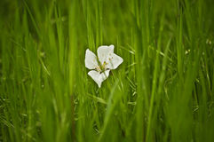 Small flower in the grass Stock Images