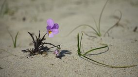 Small flower growing on sand stock video footage