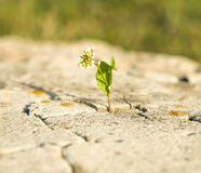 Small flower growing on a stone Royalty Free Stock Photos