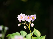 A small flower. Photo taken in summer in a row near home Royalty Free Stock Image