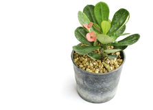 Small flower pot Royalty Free Stock Photo