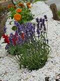 Small flower rockery. A white small chipping rockery with purple heather plant with a small red and orange flower Royalty Free Stock Images