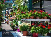 Small flower shop Royalty Free Stock Images