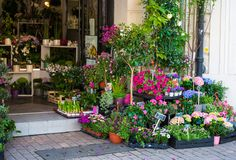 Small flower shop. Entrance into a small flower shop Stock Image