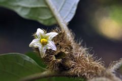 Small-flower sighted in remnant of Atlantic Forest Stock Photography