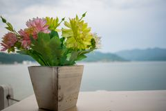 A small flower that is in a wooden pot. At the back is the largest river in Europe, the Danube royalty free stock image