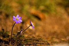 Small Flower In The Woods. A small flower in woods Stock Photos