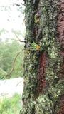 Tree mosses Stock Photography