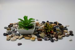 Small flowerpot with plant stock images