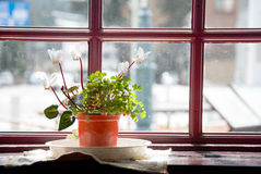 Small flowerpot  beside the window Royalty Free Stock Image