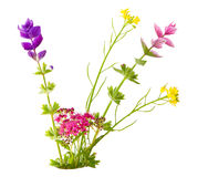 Small flowers Royalty Free Stock Photography