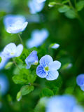 Small flowers Stock Photography
