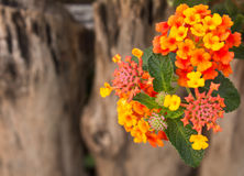 Small flowers. Royalty Free Stock Images