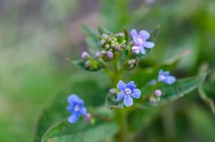 Small flowers on background closeup stock image
