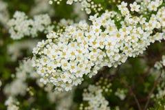 Small flowers Stock Photos