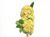 Small flowers bring together decorative bundle on a stick is a large bouquet. Stock Photo