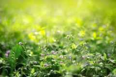 Small flowers in the grass stock photography