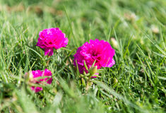Small flowers in green grass Stock Photo