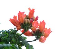 Small flowers pink red orange Beautiful bloom in nature royalty free stock image