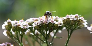 Small flowers. Several small white flowers with a common house fly sitting on top stock photos