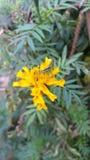 Small flowers in sri lanka royalty free stock photos