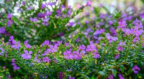 Small flowers at sunny day royalty free stock images