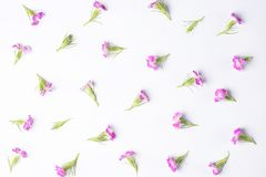 Small flowers on a white background Royalty Free Stock Photos