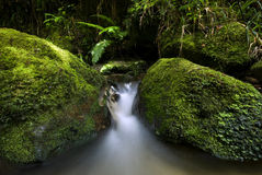 Small flowing stream, New Zealand Stock Images