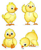 Small fluffy chickens. Four small fluffy chickens in different poses on a white background. Cute cartoon characters stock illustration