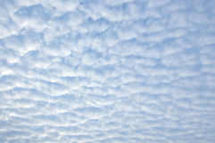 Small fluffy cirrocumulus clouds. In cloudscape Royalty Free Stock Image