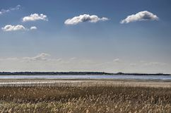 Reeds, beach and clouds. Small fluffy clouds in a blue sky over a landscape with reeds and a sandy beach on the Northsea coast near Oostvoorne, the Netherlands Royalty Free Stock Photography