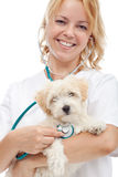 Small fluffy dog at the vet Stock Image