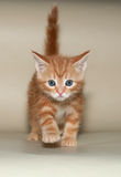 Small fluffy ginger kitten is on yellow Royalty Free Stock Images