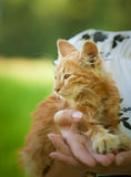 Small fluffy kitten Stock Images