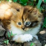 Small fluffy kitten Royalty Free Stock Photography