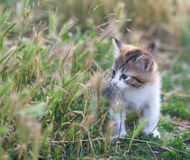 Small fluffy kitten in the grass Stock Photos