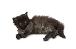 Small fluffy kitten isolated Stock Photography