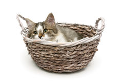 Small fluffy kitten lies in a basket on a white background Royalty Free Stock Images