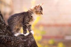 Small fluffy kitten on a tree Stock Photo