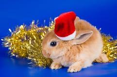 Small fluffy rabbit Stock Photos