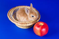 Small fluffy rabbit Royalty Free Stock Photos