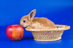 Small fluffy rabbit Stock Photo