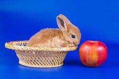 Small fluffy rabbit Stock Image